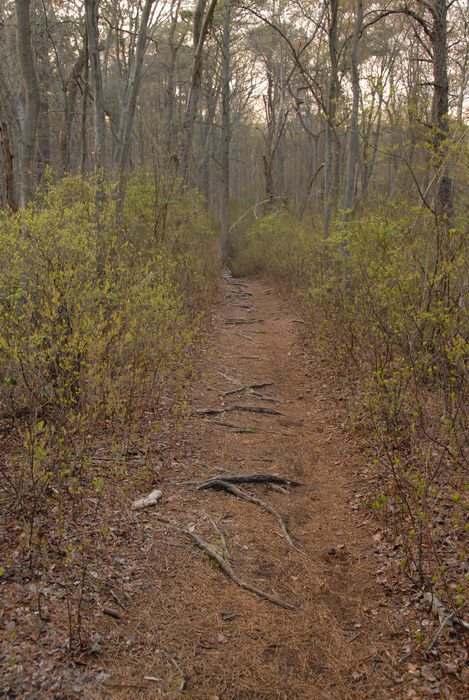 trail, trees, woods