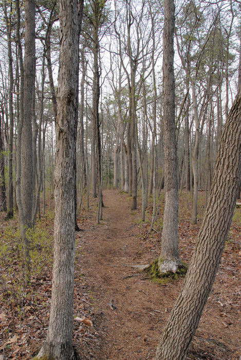 trail, trees, woods