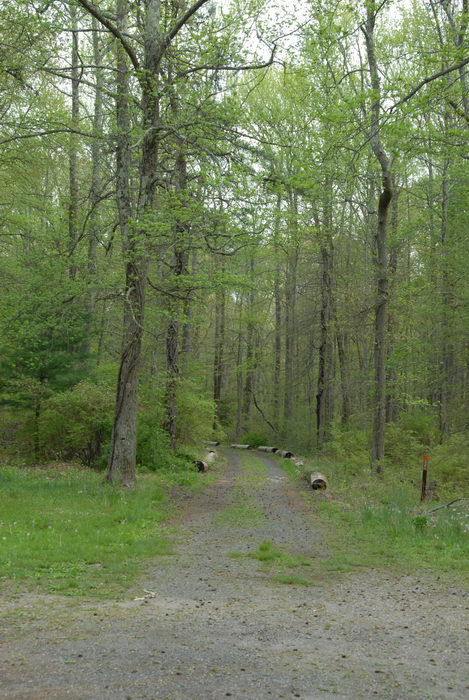 dirt road, parking, path, trail, trees, woods
