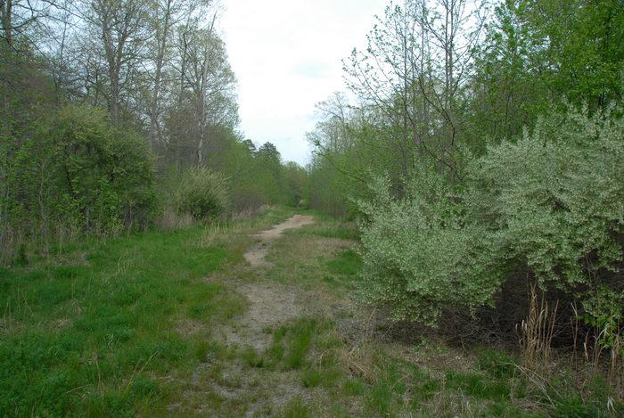 path, shrubs, trail, trees, woods