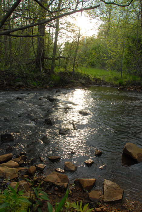 river, rocks, trees, water, woods