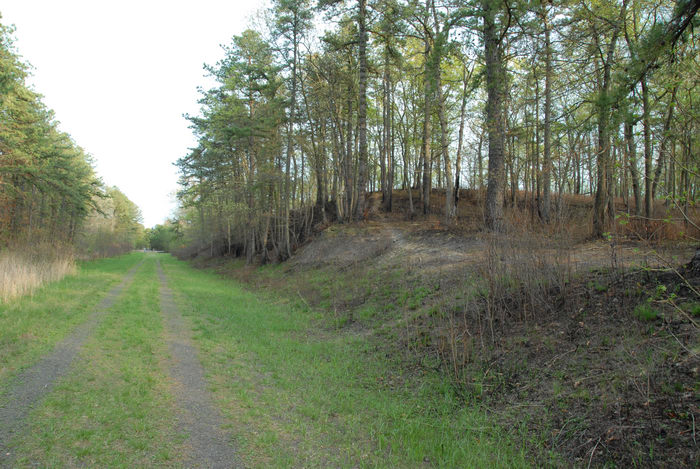 burned ground cover, dirt road, path, trail, trees, woods
