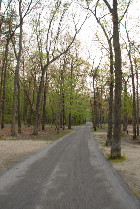 paved, road, trees, woods