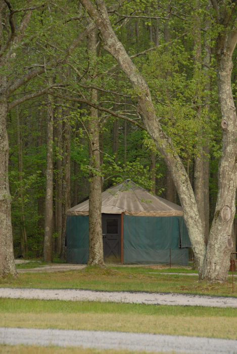 camping, paved, trees, woods, yurt