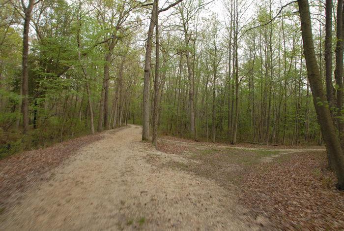 dirt road, path, trail, trees, woods