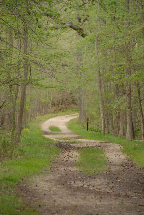 dirt road, path, trail, trees, woods