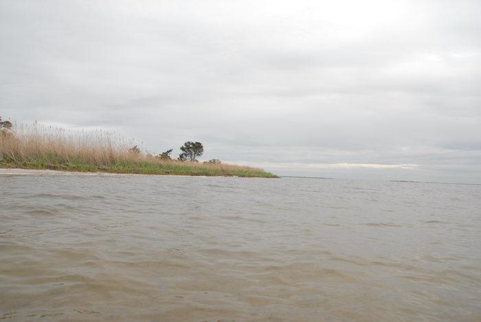 Barnegat Bay, landscape, reeds, water