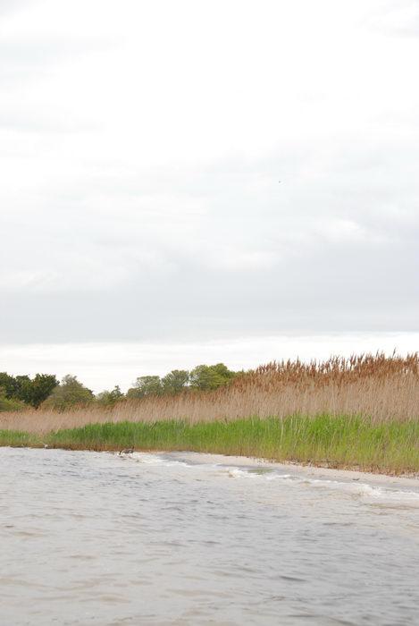 grass, reeds, water, wave, weeds