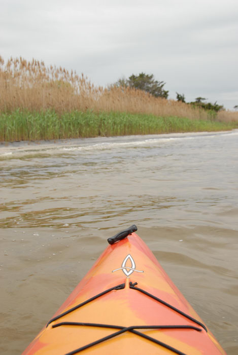 kayak, reeds, water