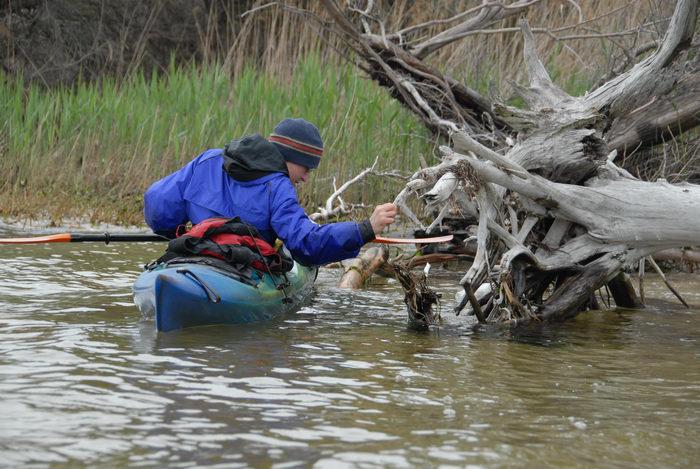 Rob, dead tree, kayak, reeds, water