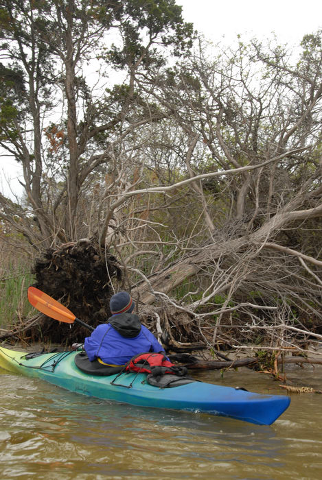 Rob, dead tree, kayak, paddle, water