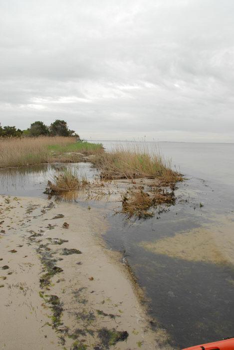 Barnegat Bay, beach, reeds, sand, water