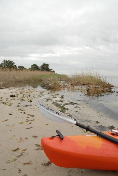 beach, kayak, paddle, reeds, sand, water