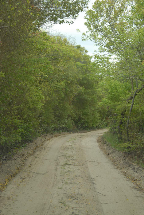 dirt road, trees