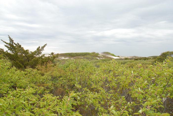 bushes, dunes, sand, tree