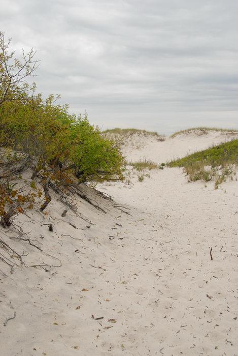 beach, dunes, sand