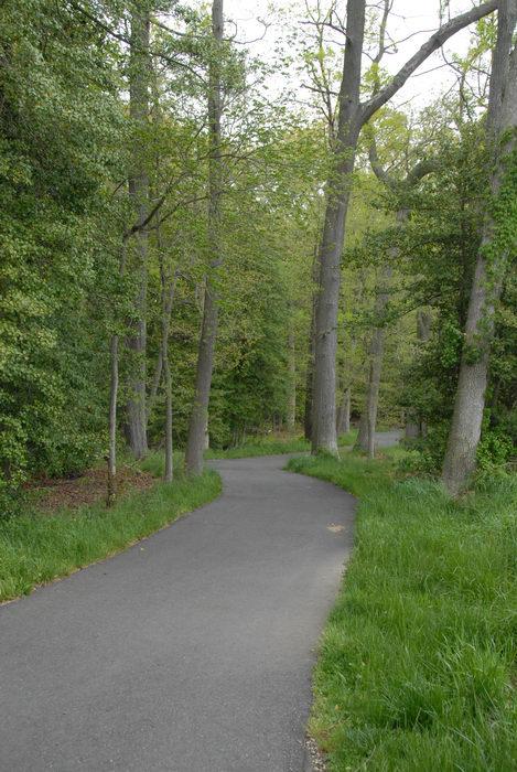 grass, path, paved, trees