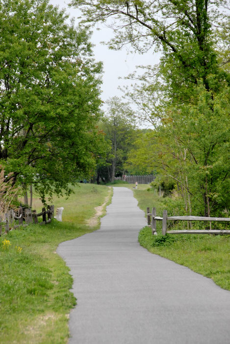 fence, grass, path, paved, trees