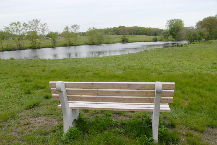 bench, grass, pond, trees, water