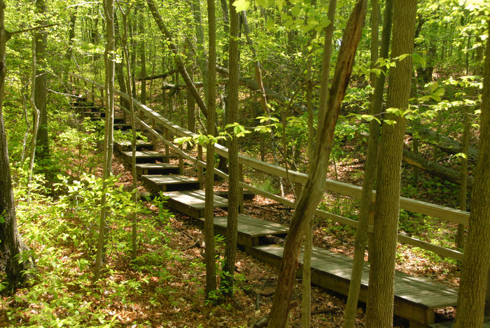 boardwalk, stairs, trees, woods