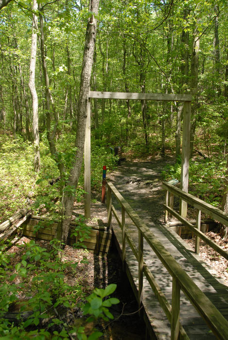 boardwalk, bridge, trail marker, trees, woods