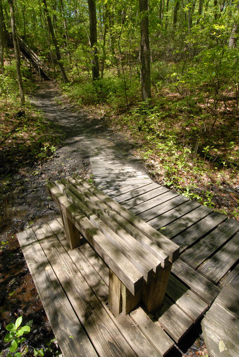 bench, boardwalk, mud, swamp, trail, trees, woods
