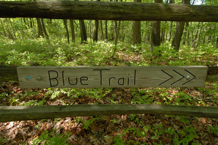 blue trail, fence, sign, trees, woods