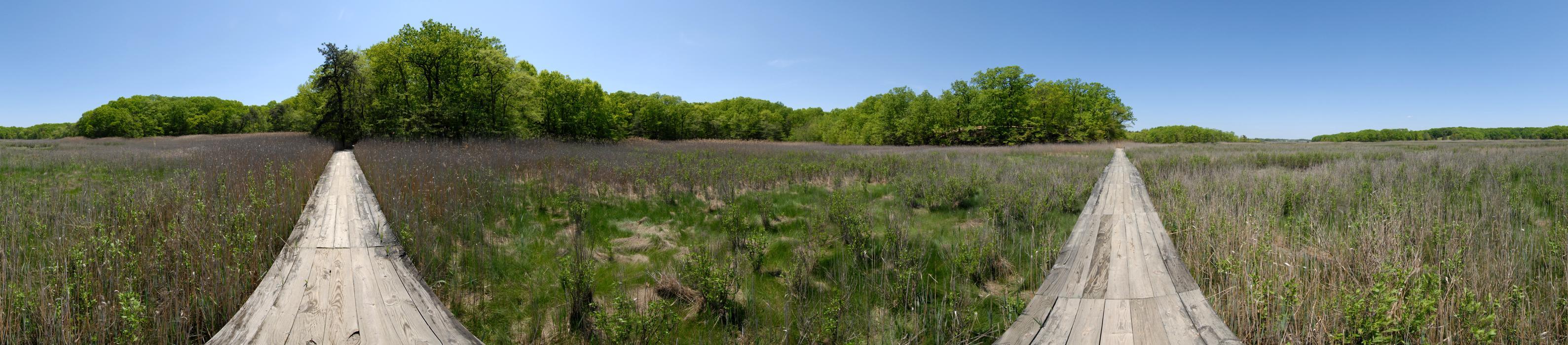 blue sky, boardwalk, bridge, grass, marsh, panoramic, trees, woods
