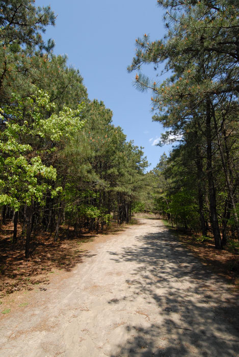 blue sky, dirt road, path, trail, trees, woods