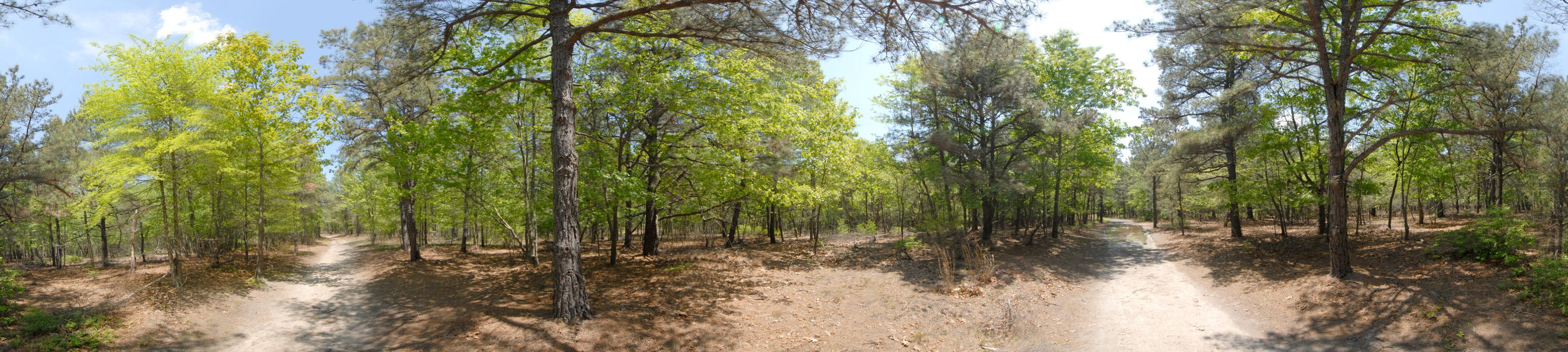 dirt road, panoramic, path, trail, trees, woods
