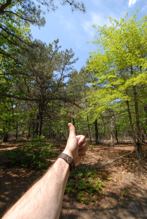 Thumbs across America, trees, woods