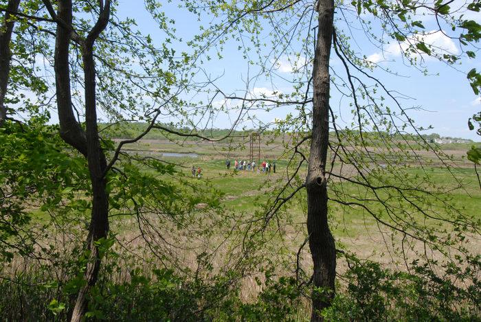 marsh, people, trees