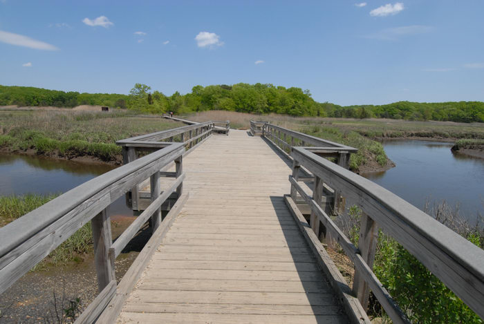 blue sky, boardwalk, bridge, grass, river, water