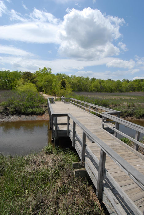 blue sky, boardwalk, bridge, grass, marsh, river, trees, water