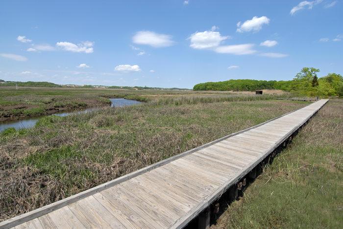 blue sky, boardwalk, grass, marsh, river, water