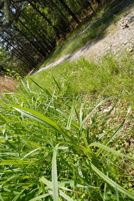 grass, path, trail