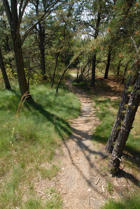 grass, path, trail, trees, woods