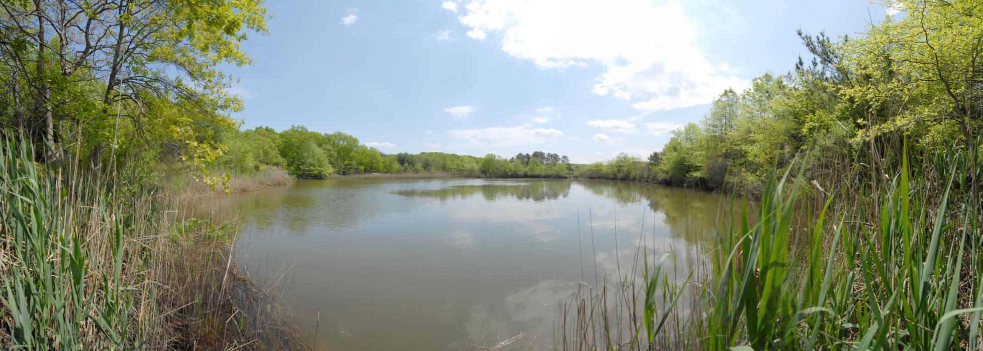 blue sky, panoramic, trees, water