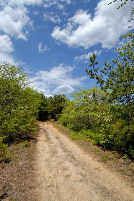 blue sky, dirt road, path, trail, trees