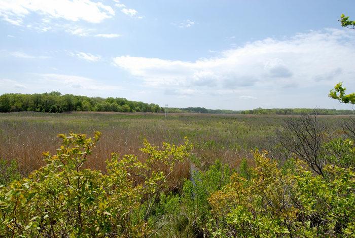 marsh, trees