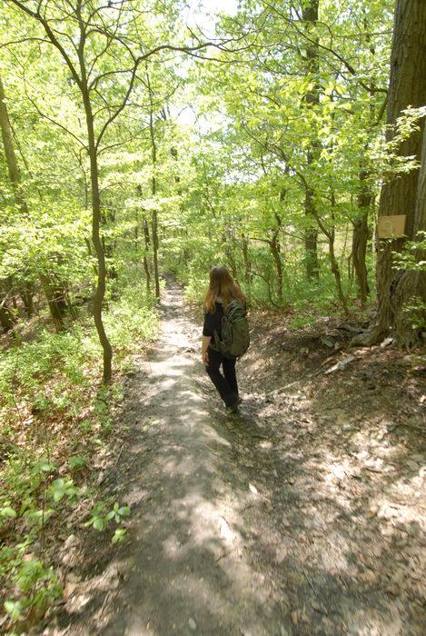 Jackie, path, trail, trees, woods