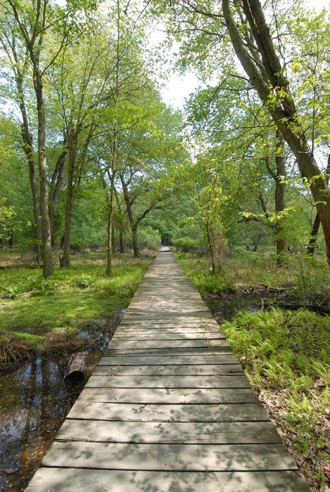boardwalk, grass, marsh, swamp, trees, water