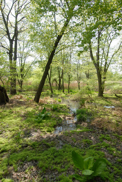 marsh, swamp, trees, water