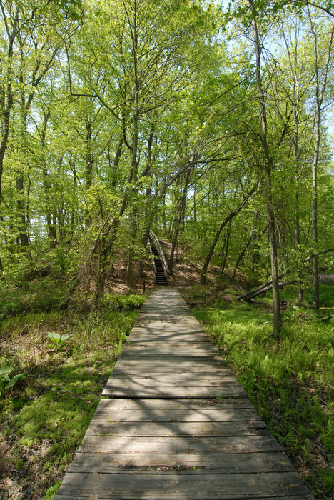 boardwalk, grass, trees, woods