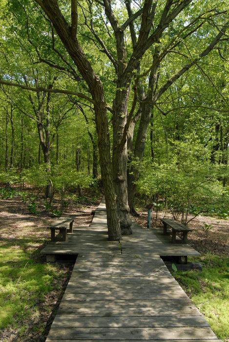 bench, boardwalk, grass, trees