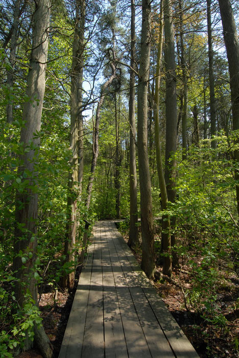 boardwalk, trees, woods