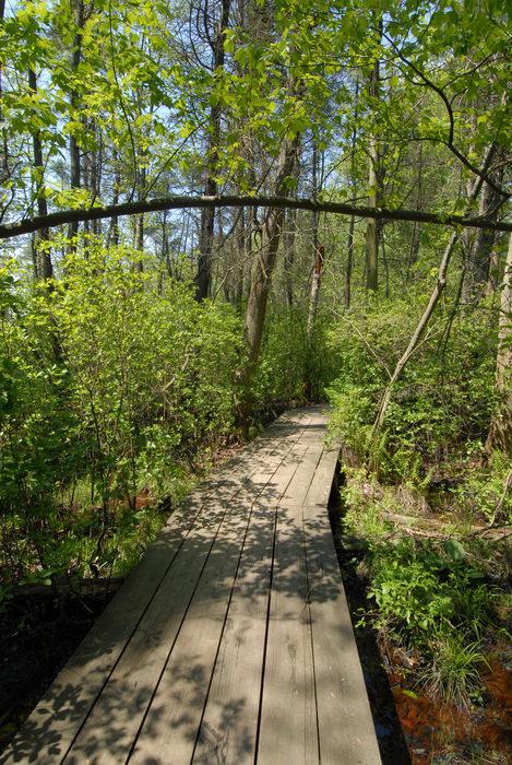 boardwalk, bridge, trees, water, woods