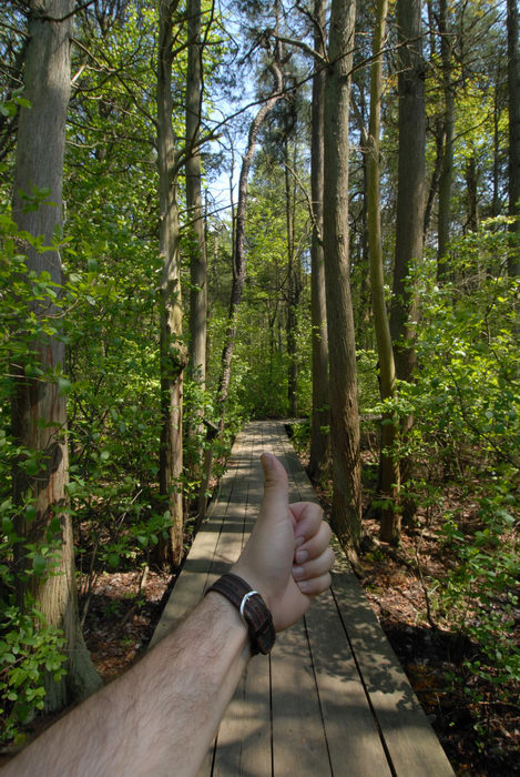 Thumbs across America, boardwalk, trees, woods