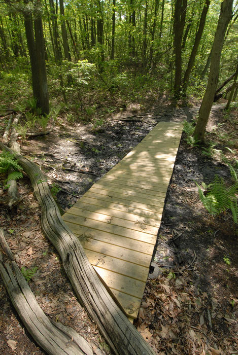 boardwalk, trees, woods