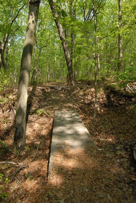 boardwalk, path, trail, trees, woods
